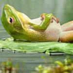 frog on lake